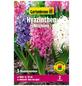 GARTENKRONE Blumenzwiebel »Gartenkrone Hyazinthen Mischung«-Thumbnail