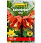 GARTENKRONE Blumenzwiebel »Gartenkrone Kaiserkrone Rubra«-Thumbnail