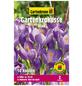 GARTENKRONE Blumenzwiebel »Gartenkrone Krokusse«-Thumbnail