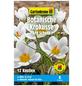 GARTENKRONE Blumenzwiebel »Gartenkrone Krokusse bot. Ard Schenk«-Thumbnail