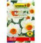 GARTENKRONE Blumenzwiebel »Gartenkrone Narzisse Barret Browning«-Thumbnail