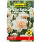 GARTENKRONE Blumenzwiebel »Gartenkrone Narzisse Delnashaugh«-Thumbnail