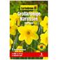 GARTENKRONE Blumenzwiebel »Gartenkrone Narzisse Fortune«-Thumbnail
