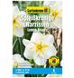 GARTENKRONE Blumenzwiebel »Gartenkrone Narzisse Lemon Beauty«-Thumbnail