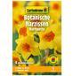 GARTENKRONE Blumenzwiebel »Gartenkrone Narzisse Martinette«-Thumbnail