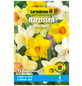 GARTENKRONE Blumenzwiebel »Gartenkrone Narzisse Mischung«-Thumbnail