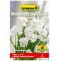 GARTENKRONE Blumenzwiebel »Gartenkrone Narzisse Ziva«-Thumbnail