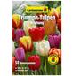 GARTENKRONE Blumenzwiebel »Gartenkrone Regenbogen-Tulpen Mix«-Thumbnail