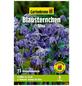 GARTENKRONE Blumenzwiebel »Gartenkrone Scilla Siberica«-Thumbnail