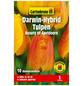 GARTENKRONE Blumenzwiebel »Gartenkrone Tulpe Beauty of Apeldoorn«-Thumbnail