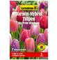 GARTENKRONE Blumenzwiebel »Gartenkrone Tulpe Big Pride Mischung«-Thumbnail