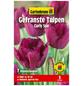 GARTENKRONE Blumenzwiebel »Gartenkrone Tulpe Curly Sue«-Thumbnail