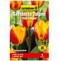 GARTENKRONE Blumenzwiebel »Gartenkrone Tulpe Flair Fringed«-Thumbnail