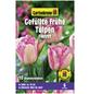GARTENKRONE Blumenzwiebel »Gartenkrone Tulpe Foxtrot«-Thumbnail
