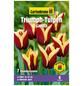 GARTENKRONE Blumenzwiebel »Gartenkrone Tulpe Gavota«-Thumbnail