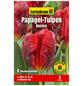 GARTENKRONE Blumenzwiebel »Gartenkrone Tulpe Papagei Rococo«-Thumbnail