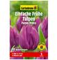 GARTENKRONE Blumenzwiebel »Gartenkrone Tulpe Purple Prince«-Thumbnail