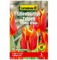 GARTENKRONE Blumenzwiebel »Gartenkrone Tulpe Synaeda Orange«-Thumbnail