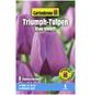 GARTENKRONE Blumenzwiebel »Gartenkrone Tulpe Triumph«-Thumbnail