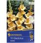 KIEPENKERL Blumenzwiebel Gladiole, Gladiolus Hybrida, Blütenfarbe: gelb-Thumbnail