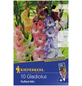 KIEPENKERL Blumenzwiebel Gladiole, Gladiolus Hybrida, Blütenfarbe: mehrfarbig-Thumbnail