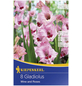 KIEPENKERL Blumenzwiebel Gladiole, Gladiolus Hybrida, Blütenfarbe: rosa-Thumbnail