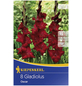 KIEPENKERL Blumenzwiebel Gladiole, Gladiolus Hybrida, Blütenfarbe: rot-Thumbnail