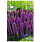 PEGASUS Blumenzwiebel Prachtscharte, Liatris spicata, Blütenfarbe: helllila-Thumbnail