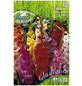 PEGASUS Blumenzwiebel Schwertblume, Gladiolus Hybrida, Blütenfarbe: mehrfarbig-Thumbnail