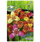PEGASUS Blumenzwiebel Tigerblume, Tigridia pavonia, Blütenfarbe: mehrfarbig-Thumbnail
