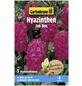 GARTENKRONE Blumenzwiebeln Hyazinthe, Hyacinthus orientalis »Jan Bos«, Blütenfarbe: rot-Thumbnail