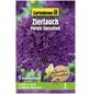 GARTENKRONE Blumenzwiebeln Zierlauch, Allium Aflatunense »Purple Sensation«, Blütenfarbe: violett-Thumbnail