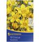 KIEPENKERL Botanische Krokusse Crocus Crocus chrysanthus »Crocus chrysanthus«-Thumbnail