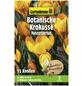 GARTENKRONE Botanischer Krokus Crocus Chrysanthus »Fuscotinctus«, zweifarbig-Thumbnail