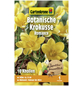 GARTENKRONE Botanischer Krokus Crocus Chrysanthus »Romance«, gelb-Thumbnail