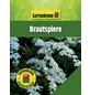 GARTENKRONE Brautspiere, Spiraea arguta, weiß, winterhart-Thumbnail