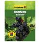 GARTENKRONE Brombeere, Rubus fruticosus »Black Satin« Blüten: creme, Früchte: schwarz, essbar-Thumbnail