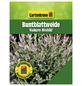 GARTENKRONE Buntblattweide, Salix integra »Hakuro Nishiki«, Blattfarbe mehrfarbig-Thumbnail