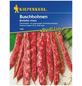 KIEPENKERL Buschbohne vulgaris var. nanus Phaseolus »Borlotto Rosso«-Thumbnail