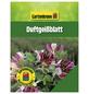 GARTENKRONE Duftgeißblatt, Lonicera heckrottii, zweifarbig, winterhart-Thumbnail