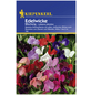 KIEPENKERL Edelwicke, Lathyrus odoratus, Samen, Blüte: mehrfarbig-Thumbnail