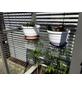 KGT Einlegeböden für Gewächshäuser »Florence«, BxH: 83 x 0,4 cm, Sicherheitsglas-Thumbnail
