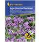 KIEPENKERL Eisenkraut, Verbena bonariensis, Samen, Blüte: helllila-Thumbnail