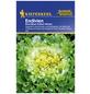 KIEPENKERL Endivie endivia Chicorium-Thumbnail