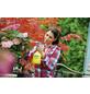 GLORIA Feinsprüher »Feinsprühgerät«-Thumbnail