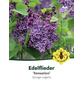 Flieder, Syringa vulgaris »Sensation«, Blütenfarbe violett-Thumbnail