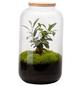 flowerbox Flowerbox Terrarium Bonbonne Autonome M Ginseng-Thumbnail