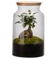 flowerbox Flowerbox Terrarium Jungle Autonome-Thumbnail