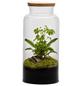 flowerbox Flowerbox Terrarium Jungle Autonome L-Thumbnail