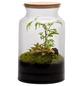 flowerbox Flowerbox Terrarium Jungle Autonome M-Thumbnail